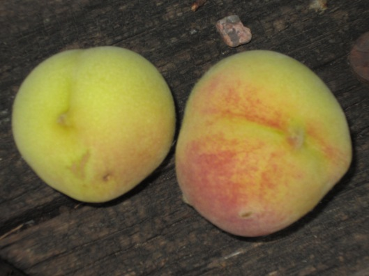 Peaches 2012